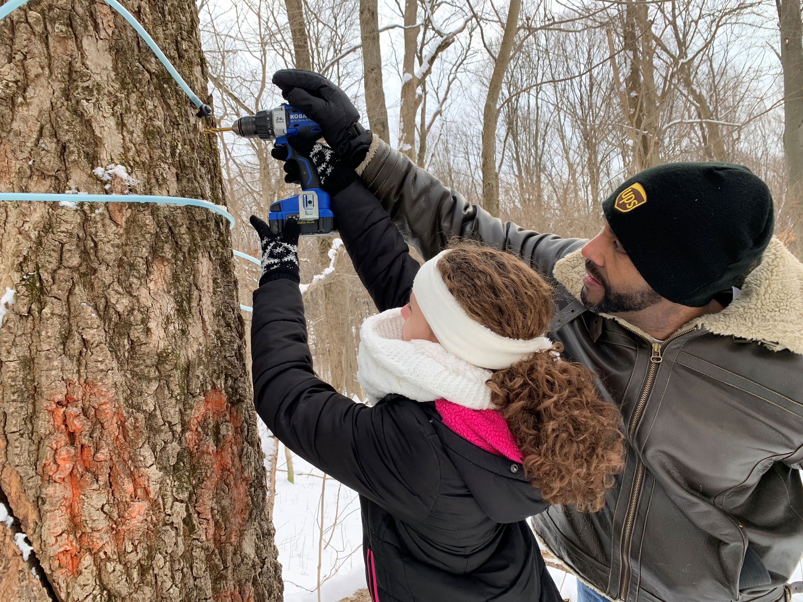 A volunteer adult and youth tap a maple tree